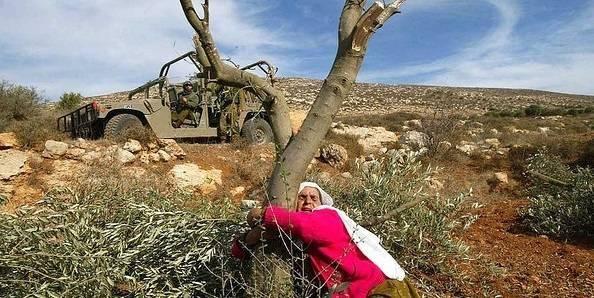 Olivproduktionen har varit en viktig affärsaktivitet för palestinierna i flera hundra år, men har länge varit under hård press från den israeliska ockupationspolitiken. Foto: Frank M. Rafik/Flickr